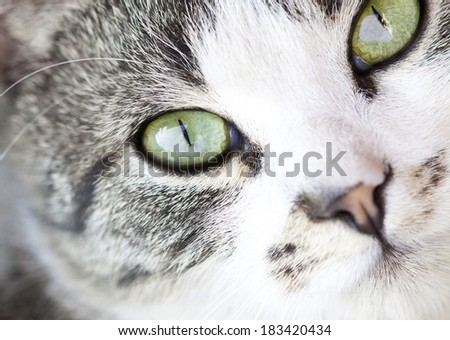 Close up on a cat's green eyes - stock photo