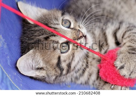 close up on a kittens playing with a red ball - stock photo