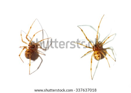 Close up on a spider isolated on white background - stock photo