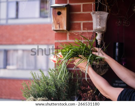 Close up on a young woman's hands as she is attending to her plants on a balcony - stock photo