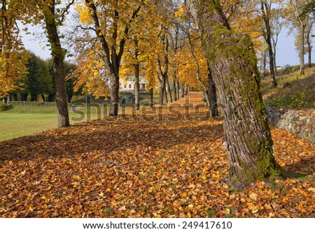 Close up on autumn leaves, chestnut trunk and a parkway. Building and more trunks in a alley, in the background. Parkway in sunshine and shadows. Garden park to the left. - stock photo