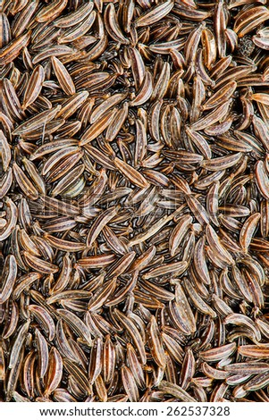 close-up on cumin - background of spices - liquid effect - stock photo