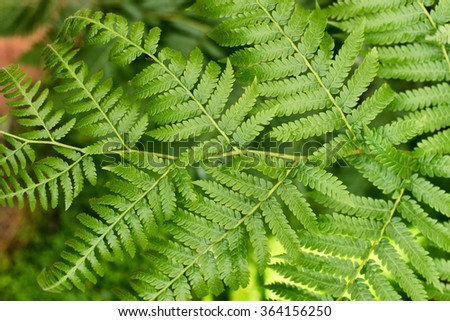 Close up on decorative texture of green fern - stock photo