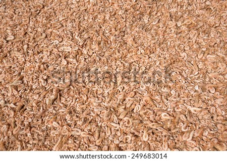 Close up on dried shrimps in the sun, Thailand - stock photo