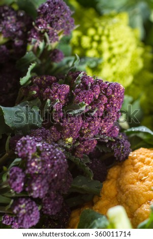 Close up on fresh and dewy purple broccoli, with yellow cauliflower and romanesco cauliflower in the background and foreground. Wonderful contrast of complementary colours. - stock photo