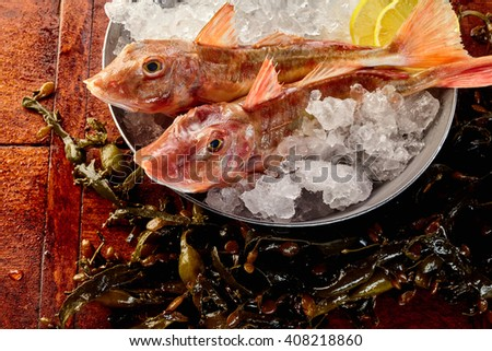 Close up on pair of whole bony raw red gurnard fish on ice ready with lemon slices in bowl to be prepared for eating - stock photo