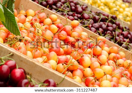 Close up on ripe red and yellow cherries in crates at the market. Display of many types of cherries.
