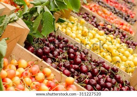 Close On Ripe Red Yellow Cherries Stock Photo 311227520 Shutterstock
