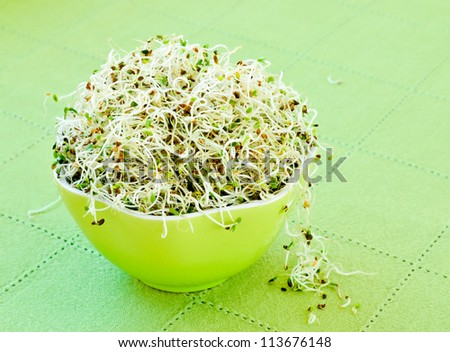 Close up on sprouts in a green bowl. - stock photo
