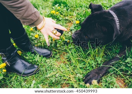 Close up on the hand of young woman holding a ball, playing fetch with her dog - friendship concept