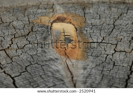 Close-up on tree trunk