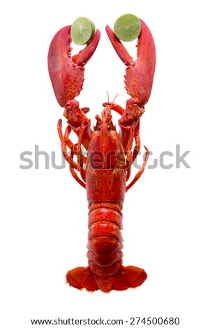 Close up One Cooked Red Lobster Clipping Lime Slices, Isolated on White Background. - stock photo