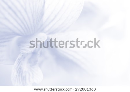 Close up orchid flower in soft and blur style with fill color filter for background