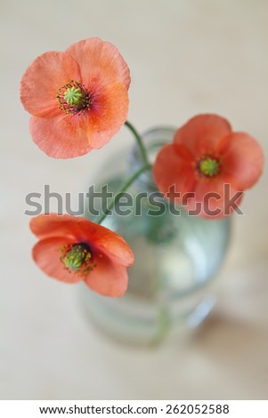 Close up overhead view of three red poppies in a glass bottle - stock photo