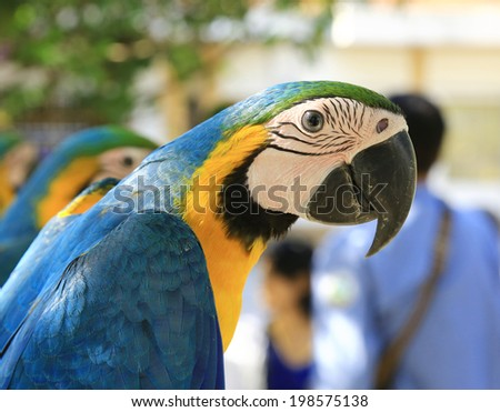 Close-up parrot bird sitting on the perch - stock photo