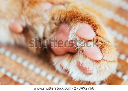 Close Up Paw Pads Of Peaceful Orange Red Cat Kitten - stock photo