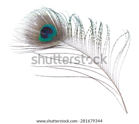Close-up peacock plume isolated on white background.