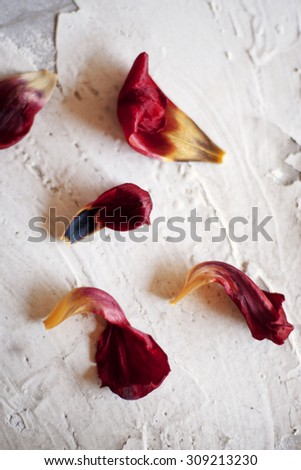 Close up petals of red tulip on the white texture table - stock photo