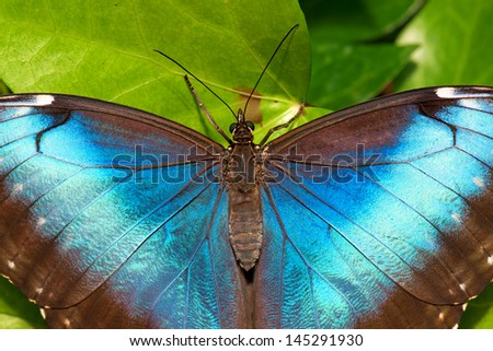 Close up photo of a beautiful butterfly - resting on a leaf - stock photo