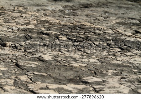 Close up photo of a dry land - stock photo