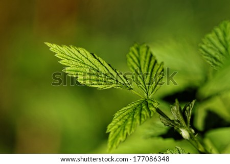 Close up photo of a green hairy leaf