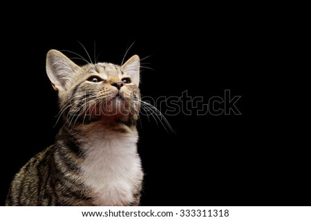 Close-up photo of a kitten looking up, isolated on black background. Studio shot with copy space - stock photo