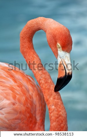 Close up photo of a pink flamingo.