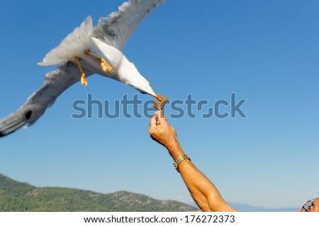 Close up photo of a seagull over the sea