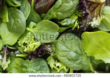 Close-up photo of fresh greens