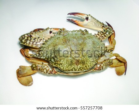 Close-up photo of fresh raw flower crab (Portunus pelagicus) also known as blue swimming sea crab, famously fresh seafood in the market.