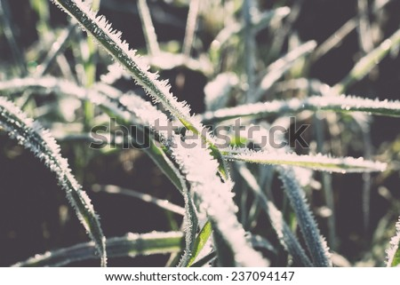 close up photo of frosty morning grass, chilling morning in fall - retro, vintage style look