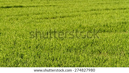 Close up photo of little green plant - stock photo