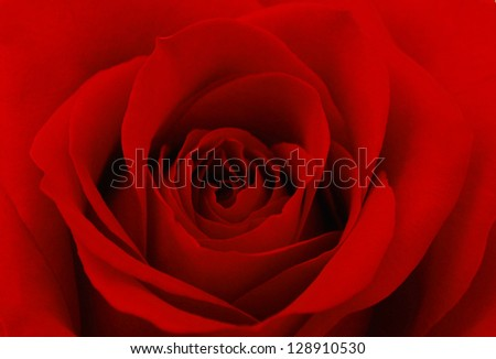 Close-up photo of red rose flower