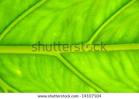 Close up photo of young leaf