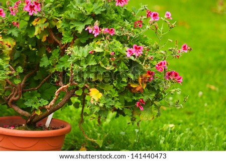Close up photo with pink flowers