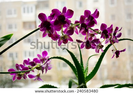 Close up picture of a orchid and aloe on a city background. - stock photo