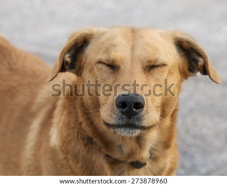 Close-up picture of a smiling dog. - stock photo