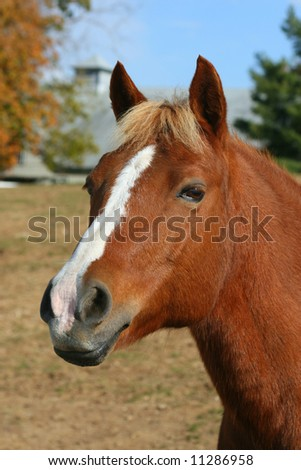 Close up picture of horse staring at photographer