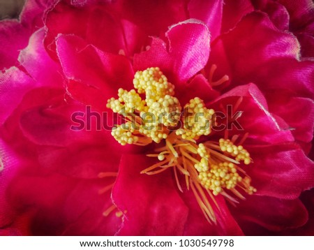 Close up picture of stamen flower. Beautiful in the nature.