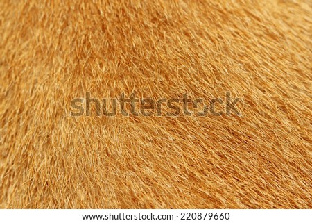 Close up picture on the animal fur, suitable as a background - stock photo
