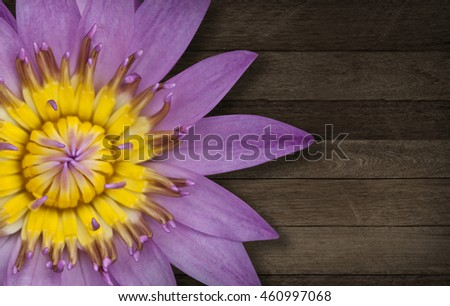 close-up, pink lotus blooming on table