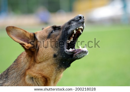 Close-up portrait angry dog on nature - stock photo