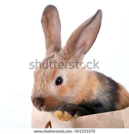 close-up portrait Bunny rabbit in a paper bag on a white background studio - stock photo