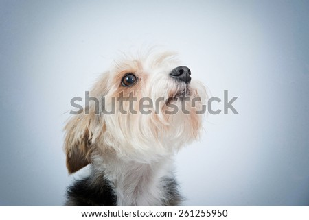 close-up portrait  dog with sad asking sight - stock photo
