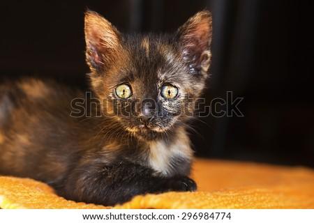 Close-up portrait of a cute little kitten. - stock photo