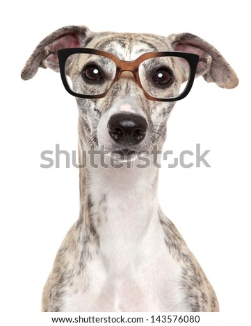 Close-up portrait of a dog in glasses, on white background - stock photo