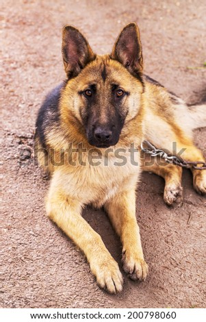 Close-up portrait of a dog, sheepdog. Shallow depth of field - stock photo