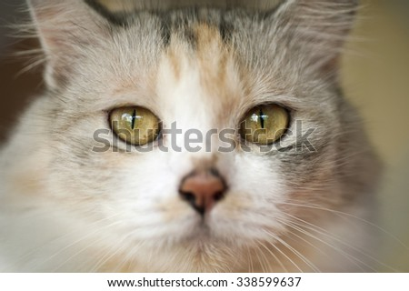 Close-up portrait of a kitten with big eyes.