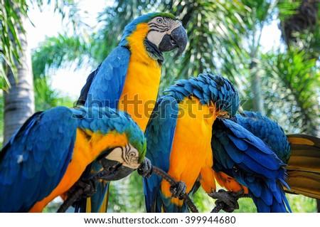 Close-up portrait of a Macaw Parrots - stock photo
