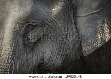 Close-up portrait of an elephant - stock photo